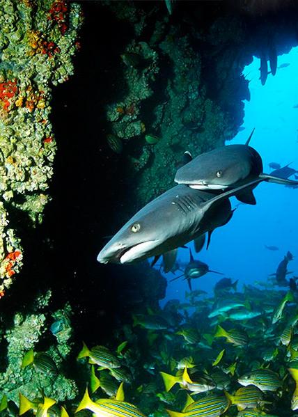Arrecifes de Coral Isla del Coco