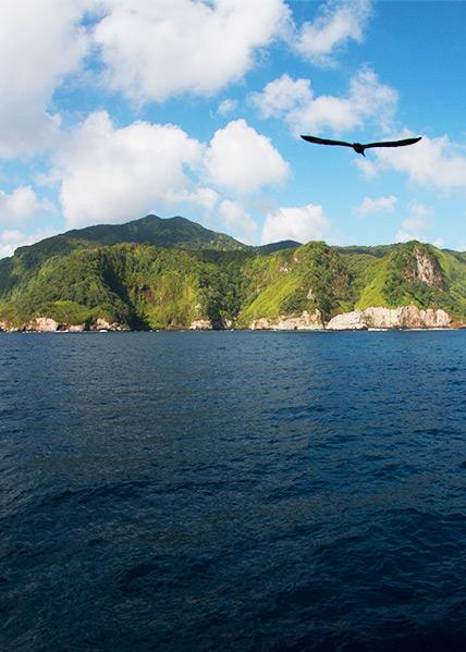 Aves marinas de la Isla del Coco