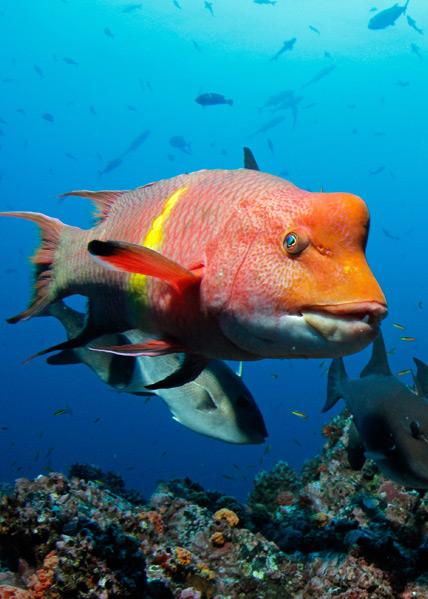 Isla del Coco biodiversidad y especies endémicas