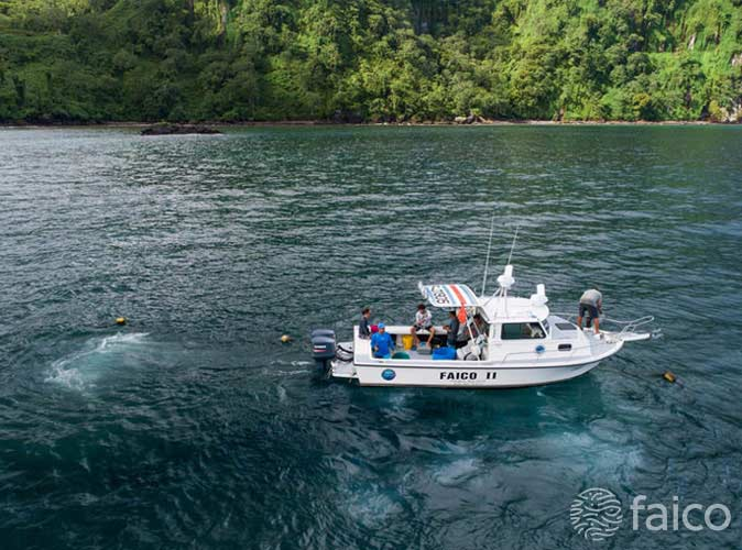 Proyecto de marcaje de tiburones en la Isla del Coco Costa Rica, Faico