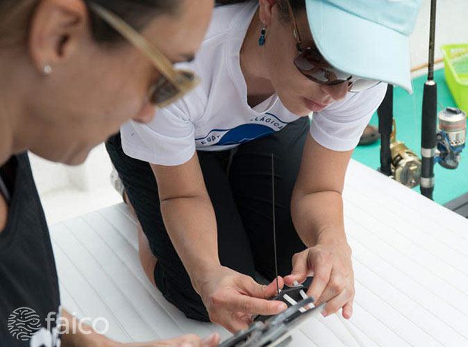 Equipo trabajando en Proyecto de marcaje de tiburones en la Isla del Coco Costa Rica, Faico
