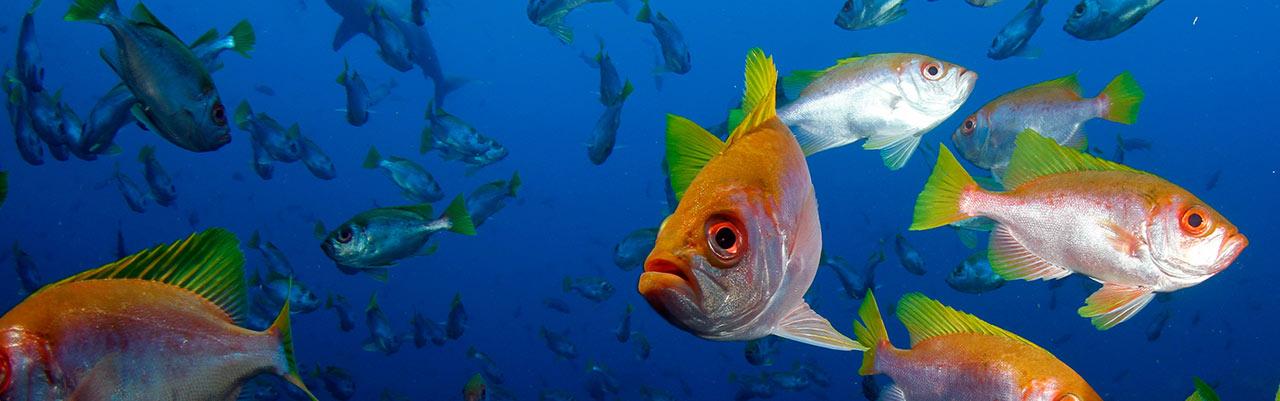 Isla del Coco, banco de peces