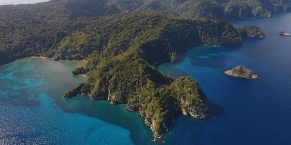 UCR monitorea tiburones de Isla del Coco