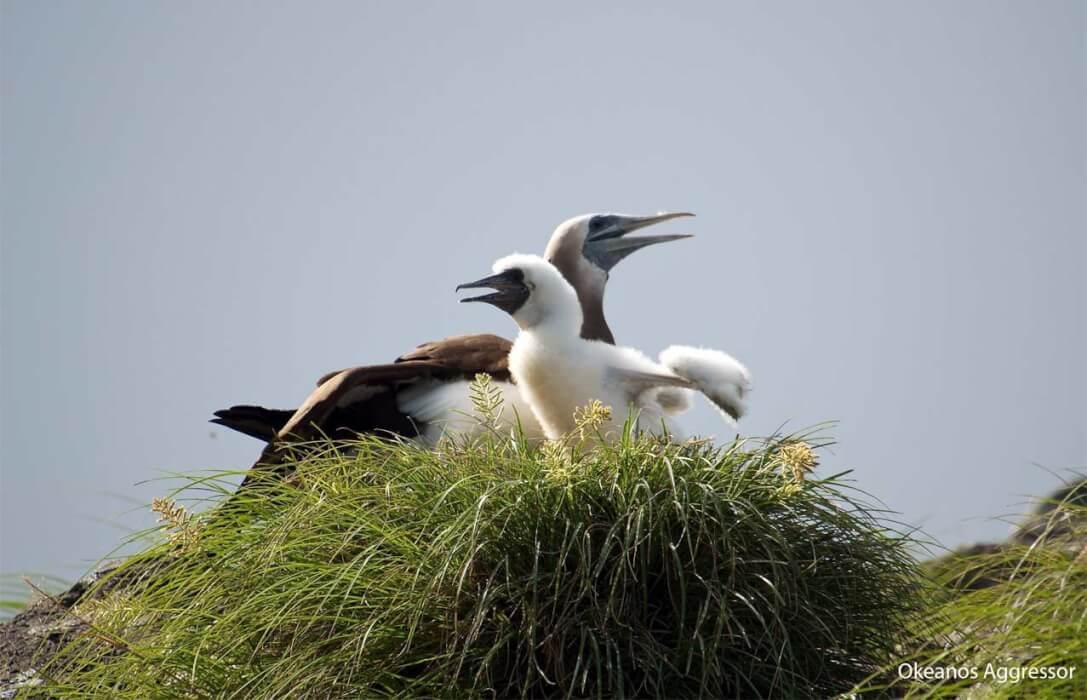Aves de la Isla del Coco