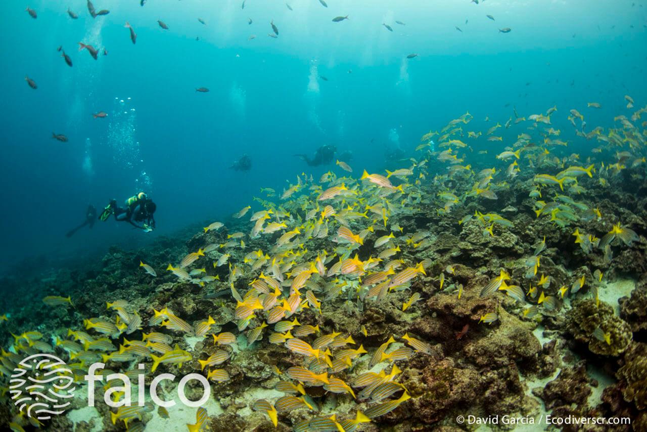 Peces de la Isla del Coco, Costa Rica