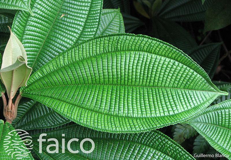 Flora de la Isla del Coco