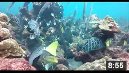 La Isla del Coco, Un Tesoro Oceánico