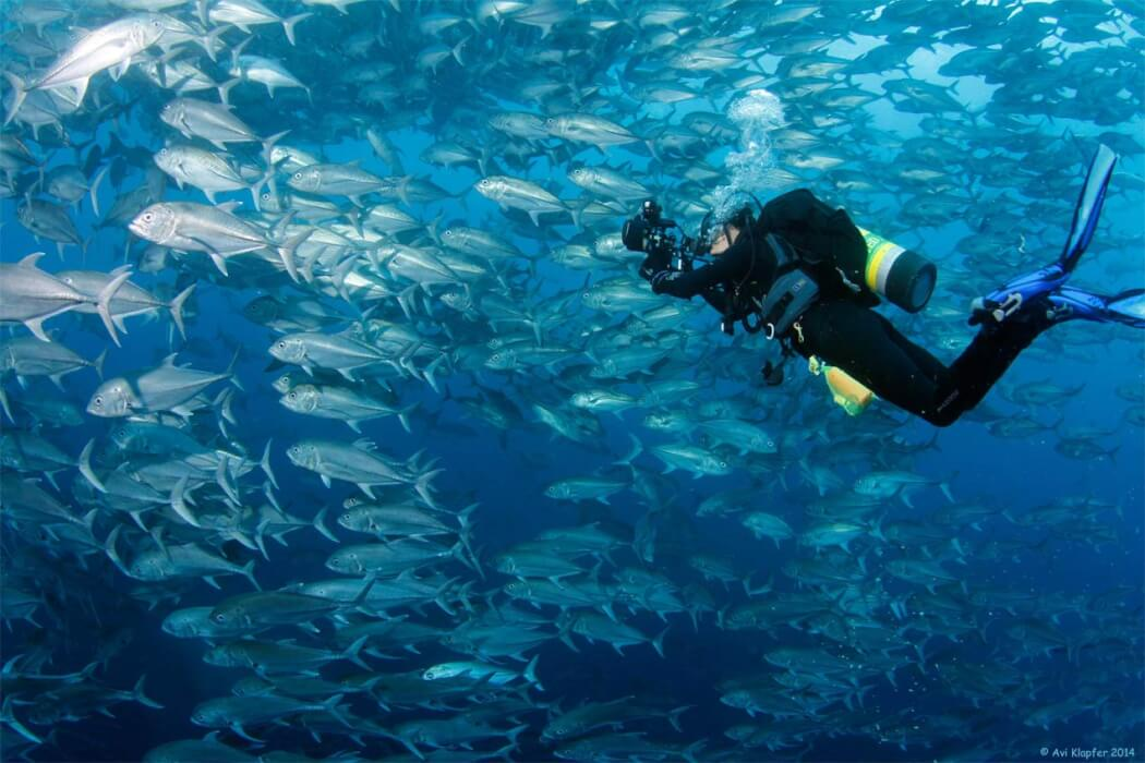 Peces de la Isla del Coco