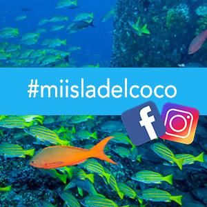 Campaña #miisladelcoco