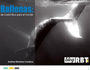 Publicacion: Ballenas de Costa Rica para el mundo - Por: Andrea Montero
