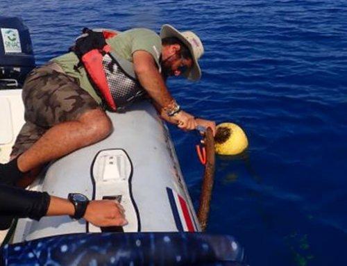 Inicia la tercera fase de investigación de especies marinas no-nativas en el Parque Nacional Isla del Coco