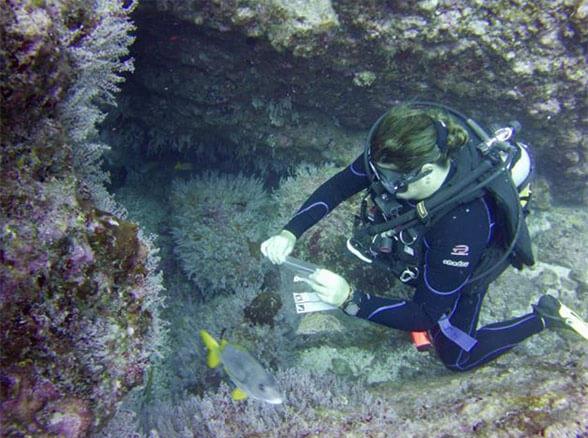 Equipo de Investigacion especies no nativas en la Isla del Coco