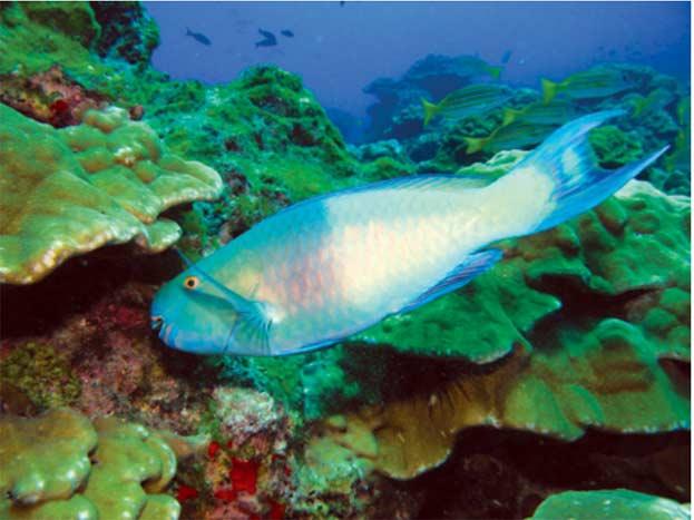 Arrecife: Parque Nacional Isla del Coco. Fotografía de Geiner Golfín