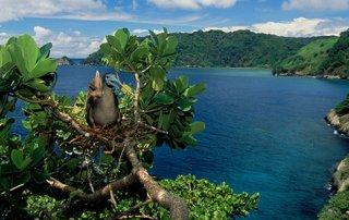 Isla del Coco es nominada a premio internacional