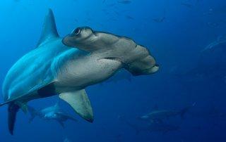 Isla del Coco es nominada para mejor área marina protegida del mundo