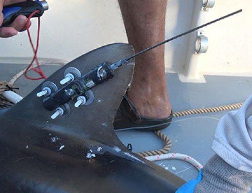 Proyecto busca conocer mejor a tiburones que habitan Isla del Coco