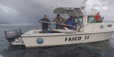 NOTICIAS Estudio revela que tiburones de la Isla del Coco recorren hasta 2.000 km en aguas de la región