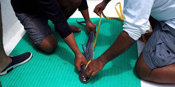 Investigación permitirá conocer comportamiento de tiburones migratorios del Parque Nacional Isla del Coco