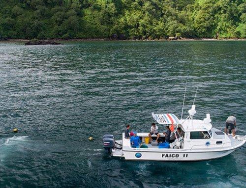 Investigación permitirá conocer el comportamiento de los tiburones migratorios del Parque Nacional Isla del Coco