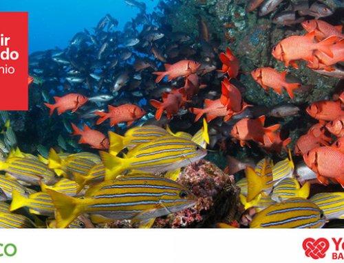 Amigos Isla del Coco y BAC Credomatic se unen por uno de nuestros  tesoros naturales