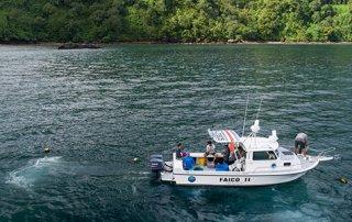 Costa Rica: Investigan el comportamiento de los tiburones migratorios del Parque Nacional Isla del Coco