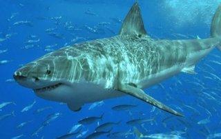 https://amprensa.com/2019/07/investigaran-comportamiento-de-tiburones-del-parque-nacional-isla-del-coco/amp/
