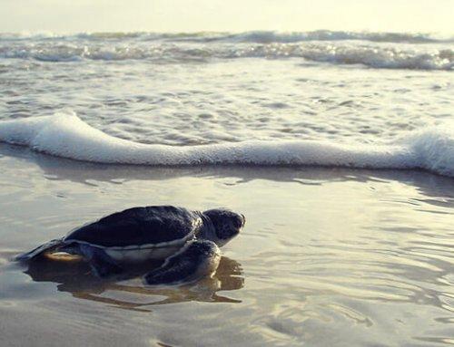 Instituciones público-privadas se unen para apoyar conservación marina
