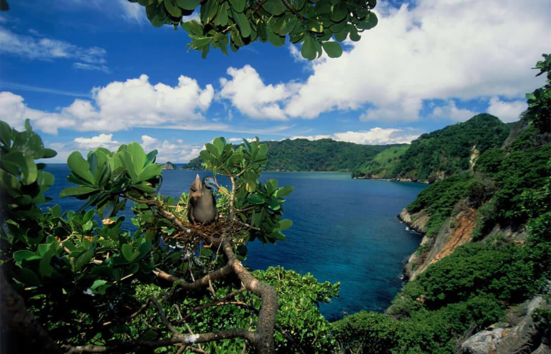Faico, inspirando la conservación marina