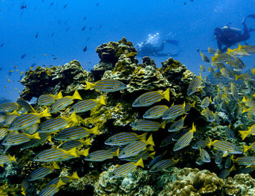 Monitoreo Ecológico Marino en el Parque Nacional Isla del Coco