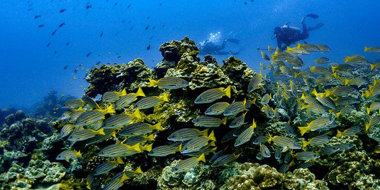 Monitoreo Ecológico Marino en el Parque Nacional Isla del Coco: