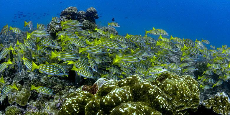 Riqueza marina de la Isla del Coco y los Montes Submarinos