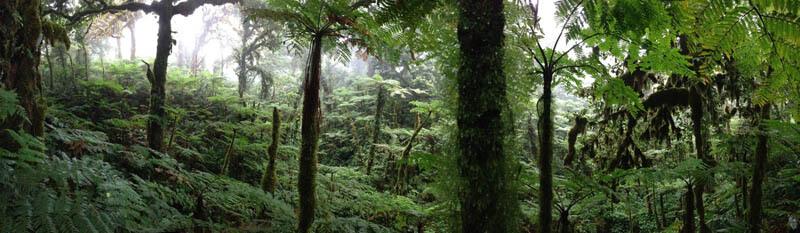 Bosque Nuboso Isla del Coco
