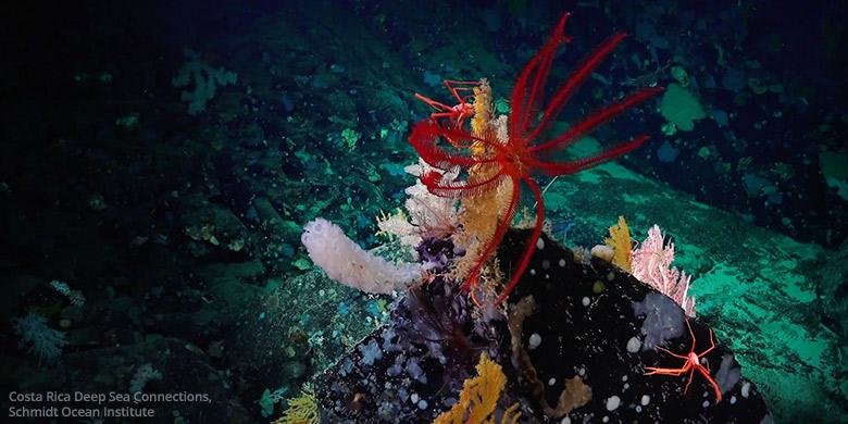 Montes submarinos son un oasis en medio del océano.