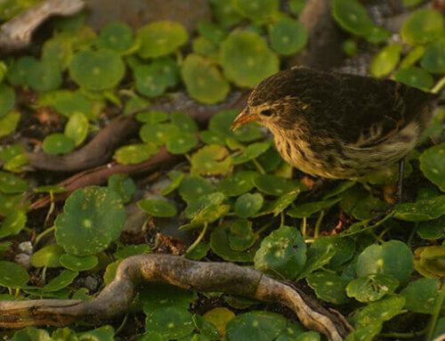 Especies endémicas de la Isla del Coco, ecosistemas y riqueza natural