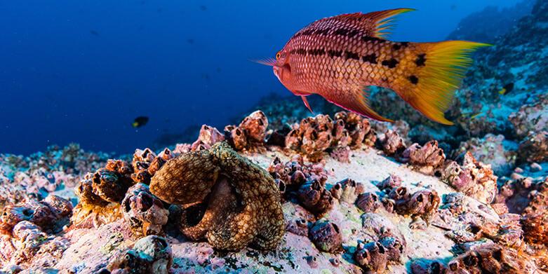 El Parque Nacional es uno de los diez mejores destinos de buceo recreativo en el mundo