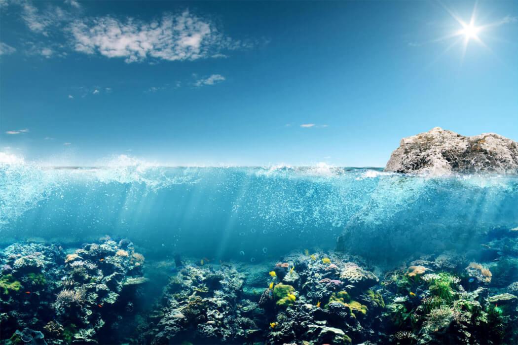 Celebremos el mes del medio ambiente y los oceanos