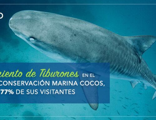 AVISTAMIENTO DE TIBURONES EN EL AREA DE CONSERVACIÓN MARINA  COCOS, ATRAE AL 77% DE SUS VISITANTES