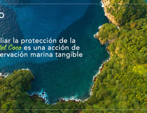 Ampliar la protección de la Isla del Coco es una acción de conservación marina tangible