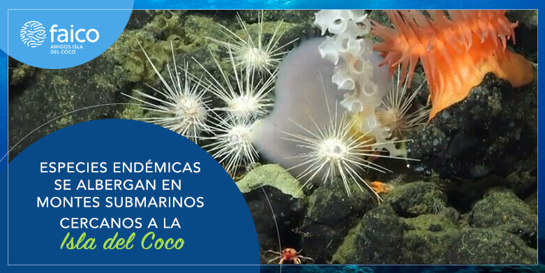 Especies endémicas se albergan en Montes submarinos cercanos a la Isla del Coco